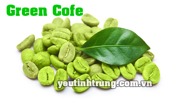 mua-green-coffe-o-dau-1
